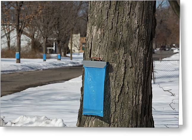 Maple Syrup Production Greeting Card by Jim West