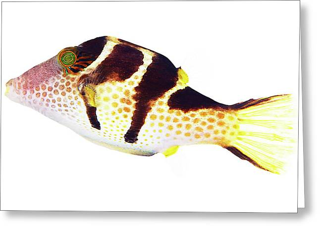 Marine Wildlife On White Greeting Card by Shannon Benson