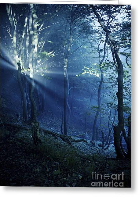 Misty Rays In A Dark Forest, Liselund Greeting Card