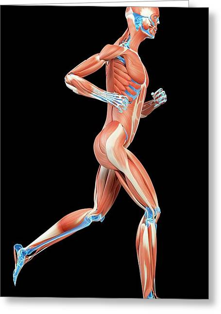 Muscular System Of Jogger Greeting Card