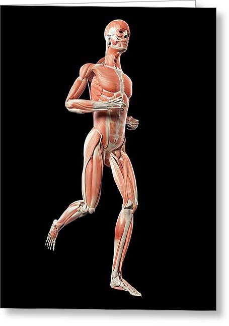 Muscular System Of Runner Greeting Card