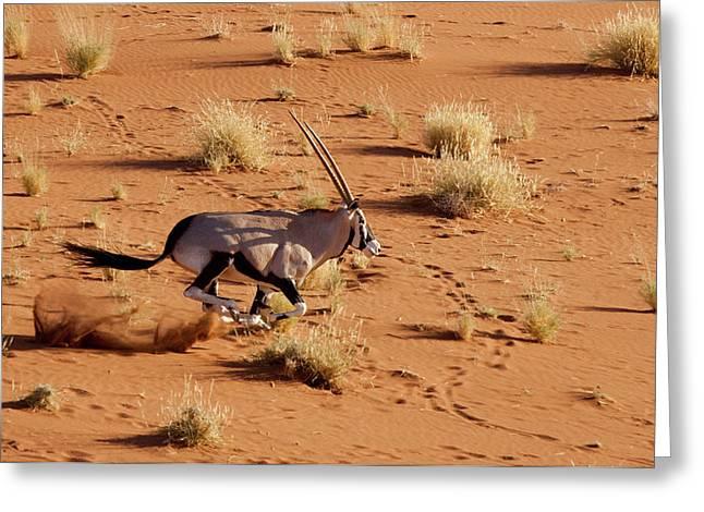 Namibia, Namib-naukluft Park, Sossusvlei Greeting Card by Jaynes Gallery