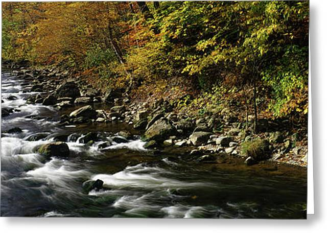 River Flowing Through A Forest Greeting Card