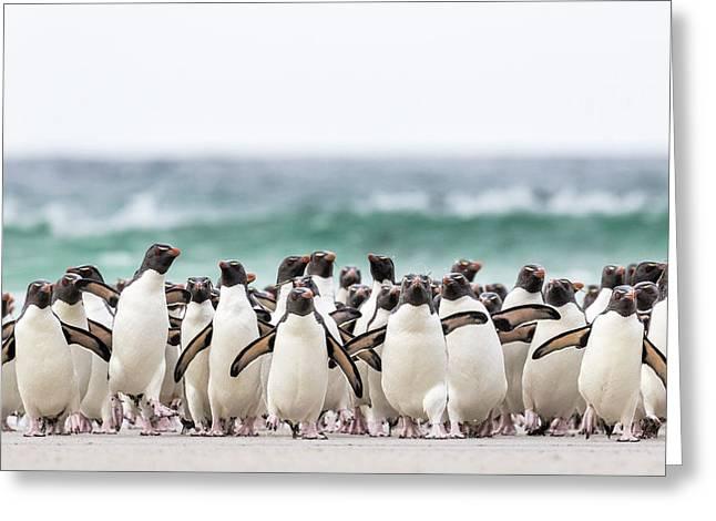 Rockhopper Penguin (eudyptes Chrysocome Greeting Card
