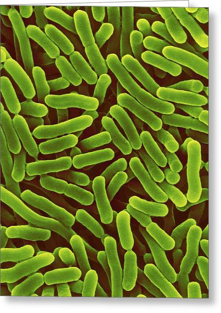 Salmonella Enterica Greeting Card by Dennis Kunkel Microscopy/science Photo Library