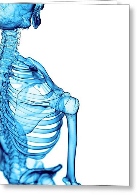 Shoulder Bones Greeting Card by Sebastian Kaulitzki/science Photo Library