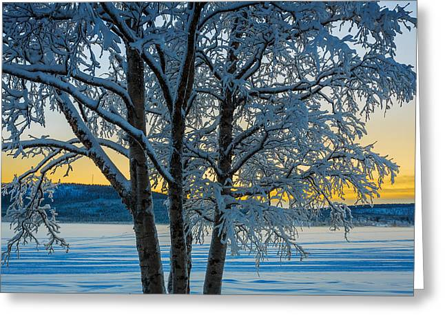 Snow Covered Trees In Extreme Cold Greeting Card by Panoramic Images