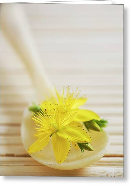 St. Johns Wort (hypericum Perforatum) Greeting Card by Gustoimages/science Photo Library