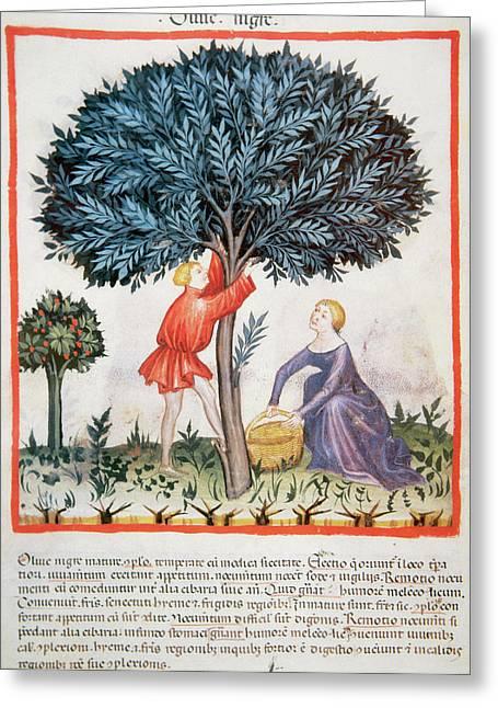Tacuinum Sanitatis, Medieval Health Greeting Card