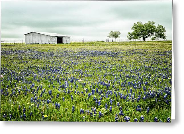 Texas Bluebonnets 6 Greeting Card