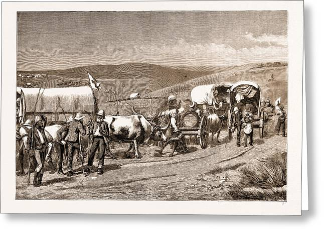 The Revolt In The Transvaal, South Africa Greeting Card by Litz Collection