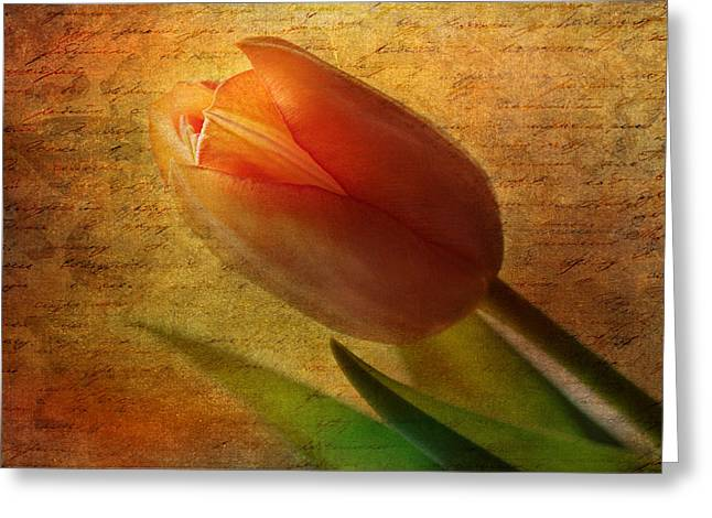 Tulip Greeting Card by Heike Hultsch