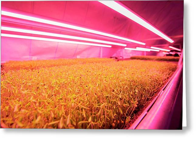 Underground Horticulture Greeting Card by Louise Murray