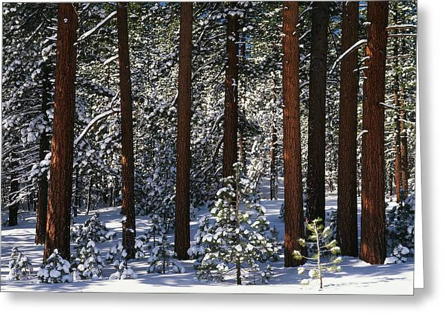 Usa, California, Inyo National Forest Greeting Card by Adam Jones