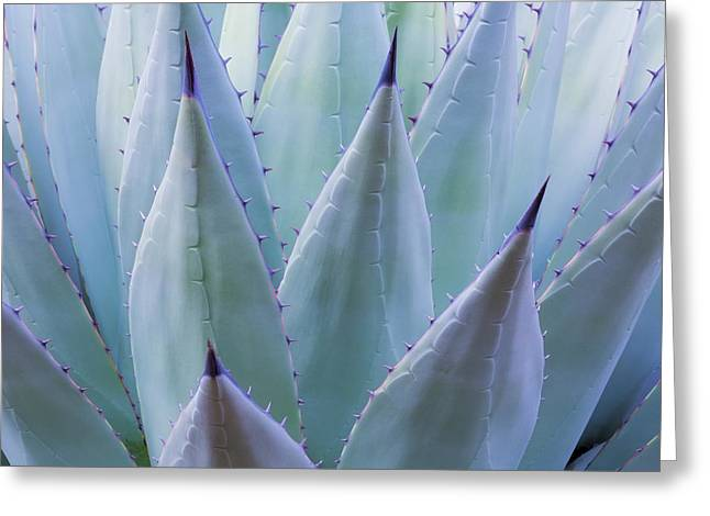 Usa, Texas, Guadalupe Mountains Greeting Card by Jaynes Gallery
