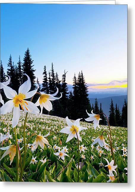 Usa, Washington State, Olympic National Greeting Card