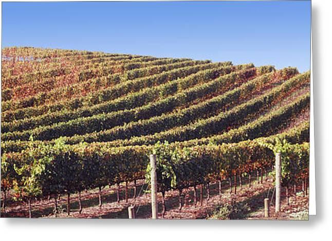 Vineyard, Napa Valley, California, Usa Greeting Card by Panoramic Images