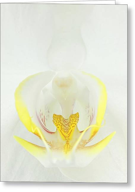 White Orchid-3 Greeting Card