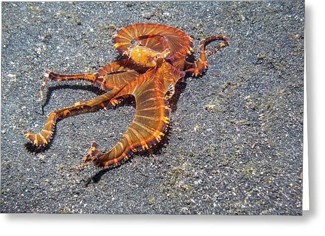 Wonderpus Octopus Greeting Card by Georgette Douwma