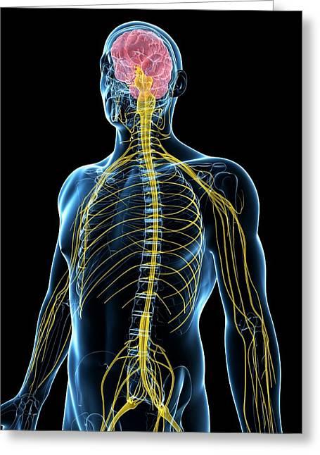 Human Nervous System Greeting Card