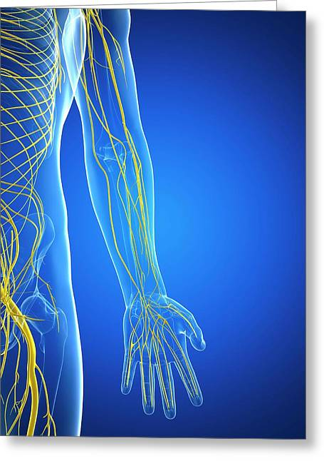 Nervous System Greeting Card by Sciepro/science Photo Library