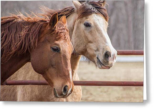 6820 Horses Portrait Greeting Card by Deidre Elzer-Lento
