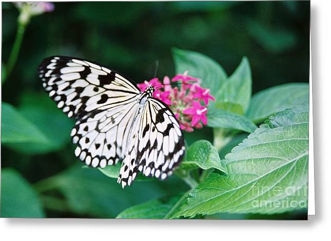 #686 19a Wings Of Joy Butterfly Black And White Greeting Card