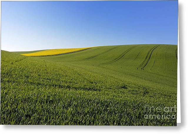 Agricultural Landscape. Auvergne. France. Greeting Card by Bernard Jaubert