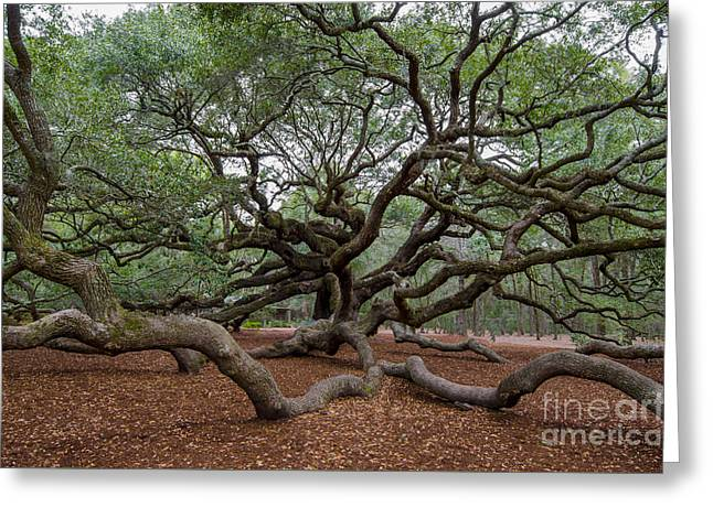 Mighty Branches Greeting Card