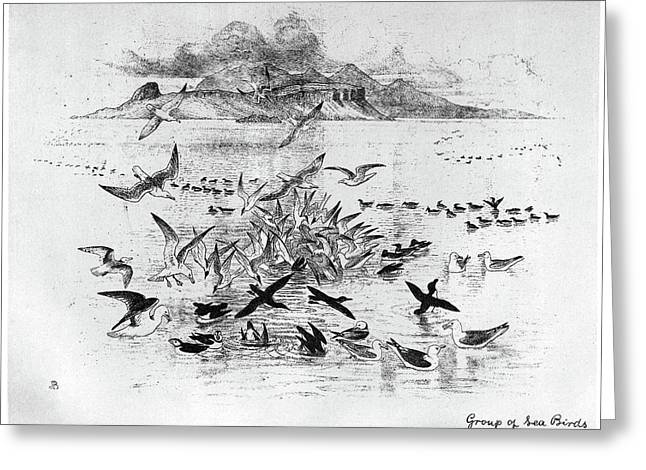 Blackburn Birds, 1895 Greeting Card