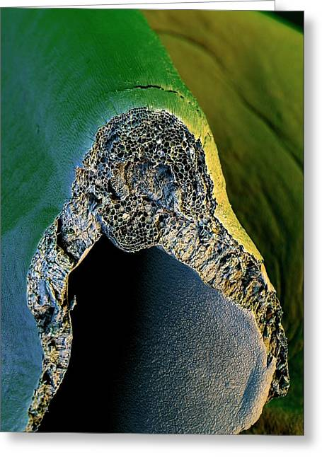 Broccoli Greeting Card by Stefan Diller