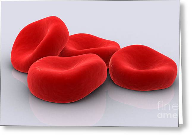 Conceptual Image Of Red Blood Cells Greeting Card by Stocktrek Images