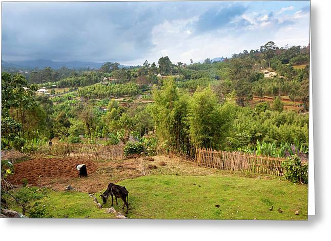 Dorze In The Guge Mountains, Ethiopia Greeting Card