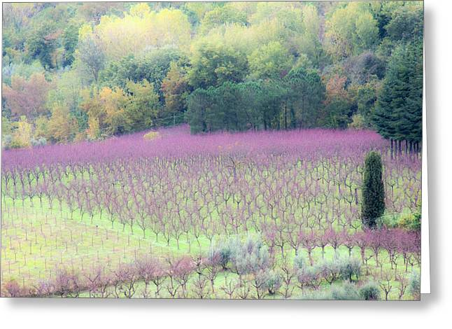 Europe, Italy, Tuscany Greeting Card