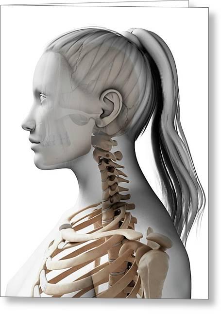 Female Neck Bones Photograph By Sebastian Kaulitzki
