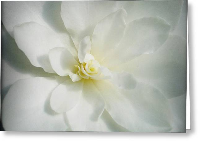 Flower Greeting Card by Les Cunliffe