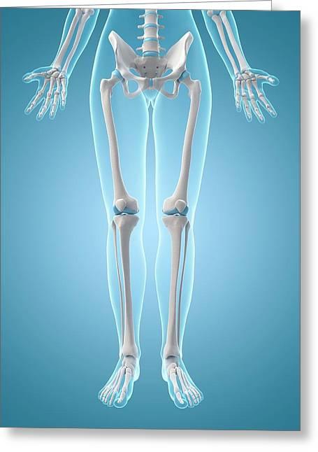Human Leg Bones Greeting Card by Sebastian Kaulitzki