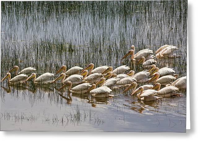 Kenya, Lake Nakuru National Park Greeting Card