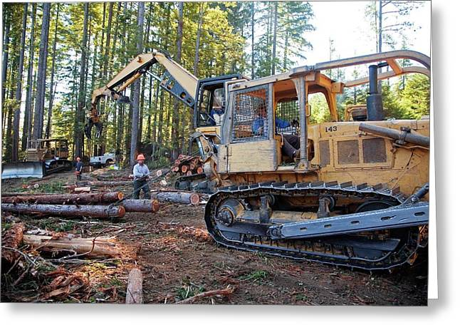 Logging Redwood Trees Greeting Card