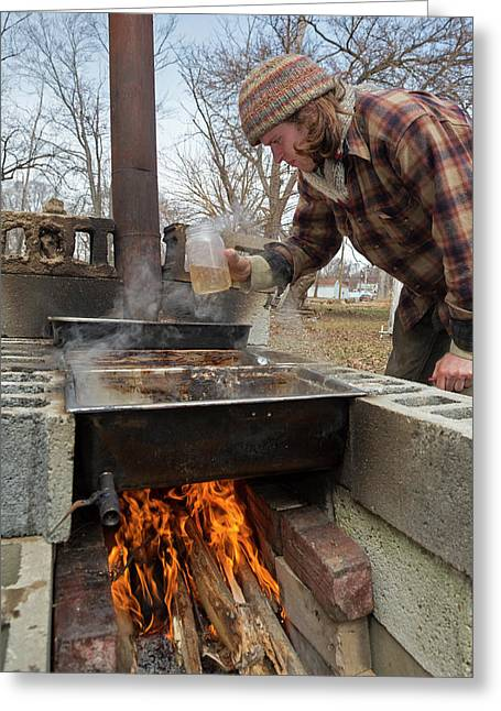 Maple Syrup Production Greeting Card
