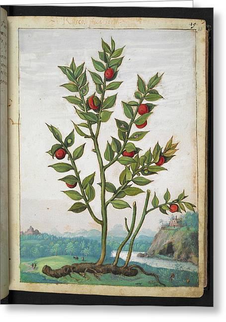 Medicinal Plant Greeting Card