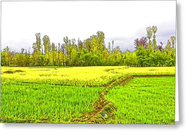 Mustard Fields In Kashmir Greeting Card