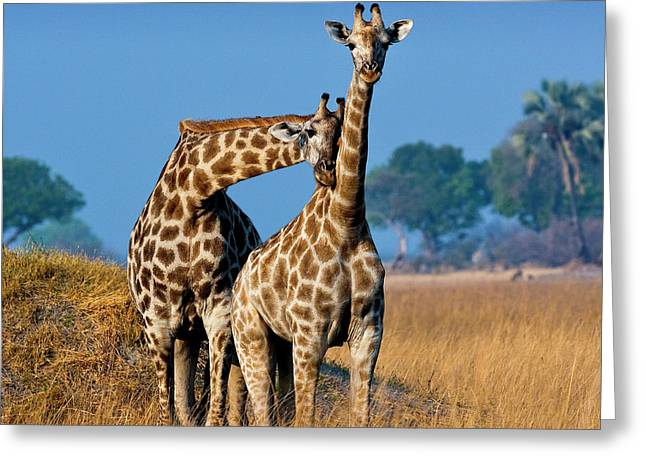 Okavango Delta, Botswana Greeting Card by Janet Muir