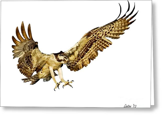 Osprey Flight Greeting Card by Larry Linton
