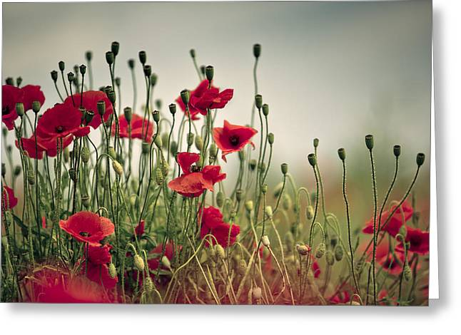 Poppy Meadow Greeting Card