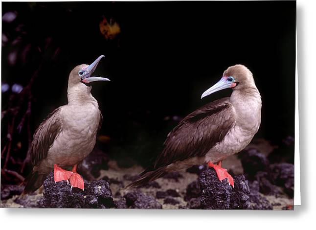 South America, Ecuador, Galapagos Greeting Card