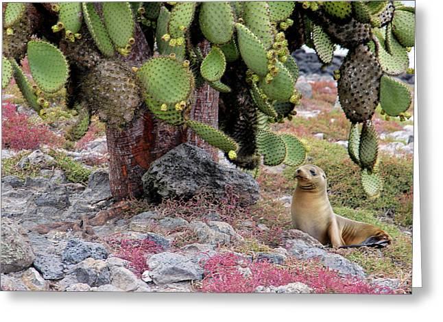 South America, Ecuador, Galapagos Greeting Card by Kymri Wilt