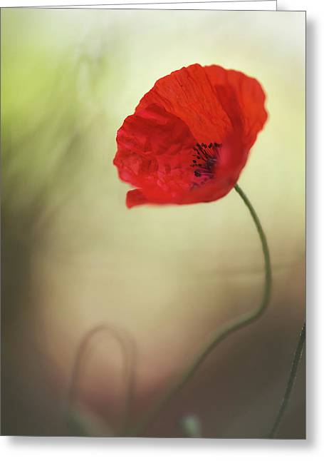 Untitled Greeting Card by Keren Or