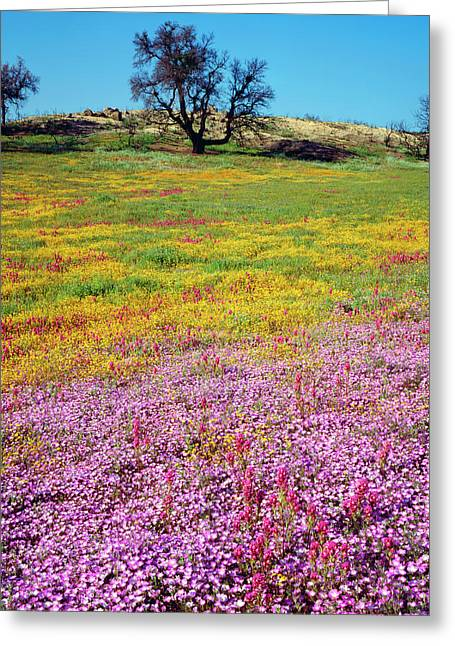 Usa, California, Cleveland National Greeting Card by Jaynes Gallery