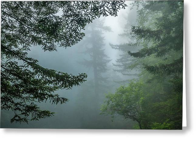 Usa, California, Redwoods National Park Greeting Card by Jaynes Gallery